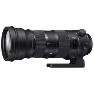 カメラレンズ 150-600mm F5-6.3 DG OS HSM Sports ブラック [シグマ /ズームレンズ]