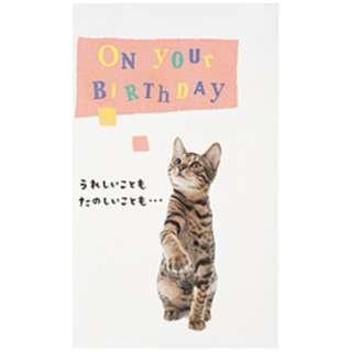 [グリーティングカード] BD動物ポップカード 猫 B28-092