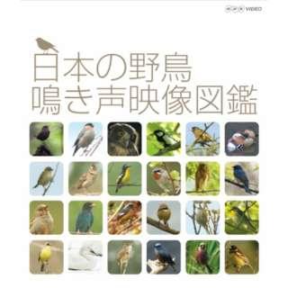 日本の野鳥 鳴き声映像図鑑 【ブルーレイ】