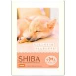 DOG IMAGE BATH POWDER SHIBA