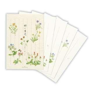 葉書箋野の草花 ECD-568-825