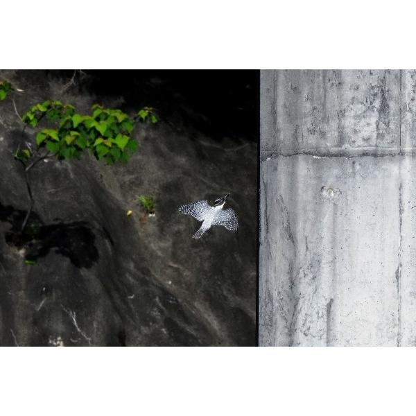1482816R2_1.jpg